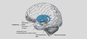 Что происходит в голове