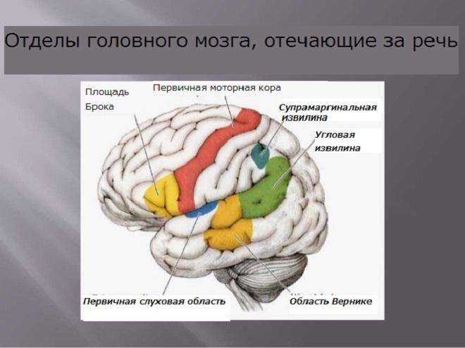 Строение головы