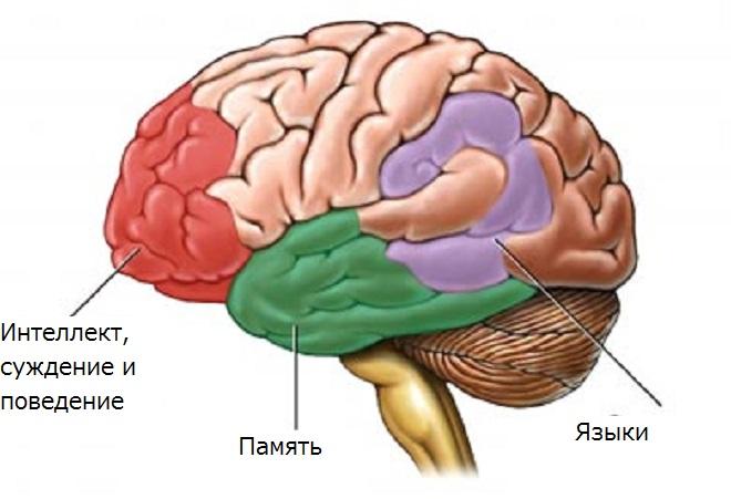 Карта мозга