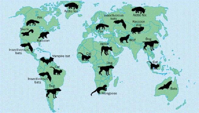 Регионы распространения зараженных животных