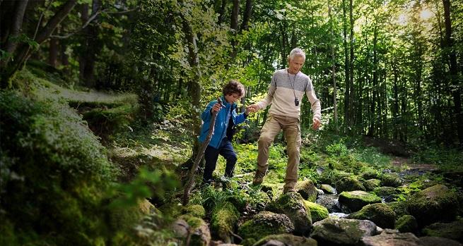 Прогулка по лесу может быть опасна