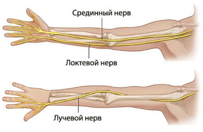 Строение нервов