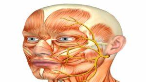 расположение лицевого нерва