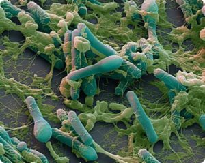 бактерия ботулизма